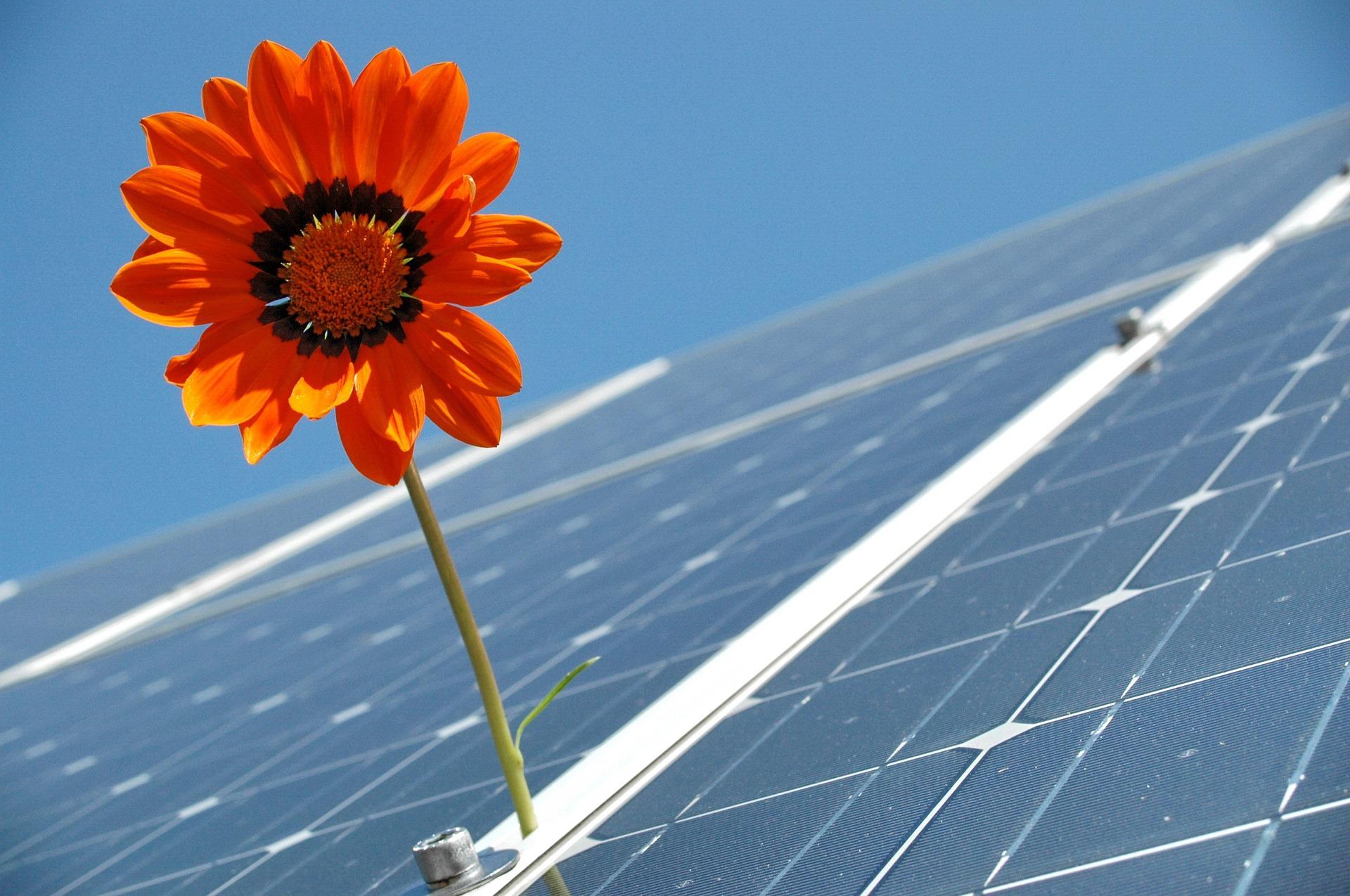Solarpanel mit roter Blume